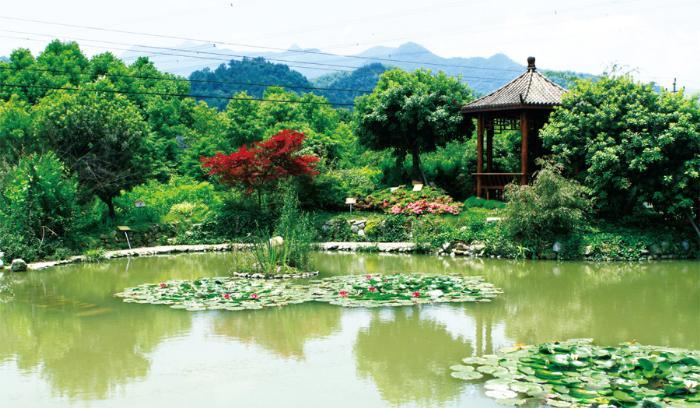 寿仙谷药业基地的药园风景宜人