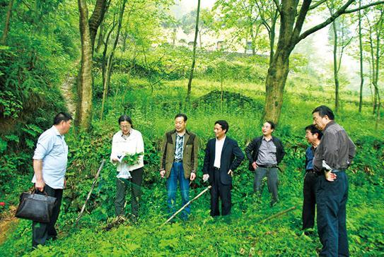 大家在吴月龙的带领下来到了植被丰茂的富坑