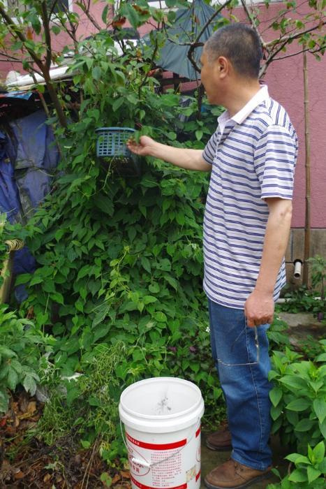 陈基海的诊室外自种了各种类常用中草药