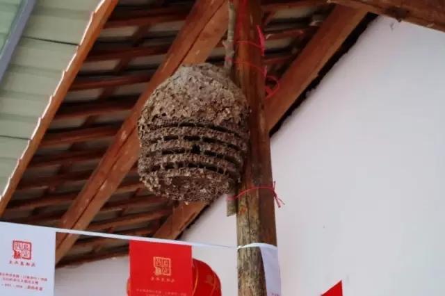 房梁上的土蜂巢
