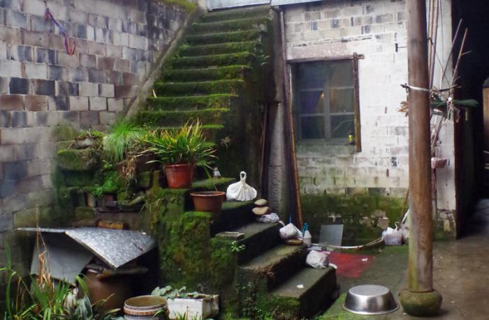 老人家的后院