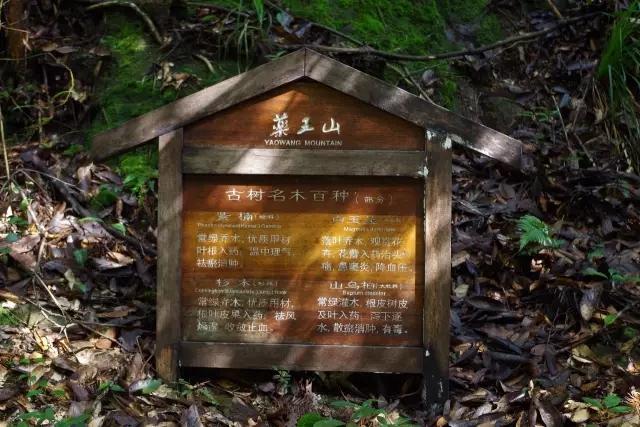 药王山风景区
