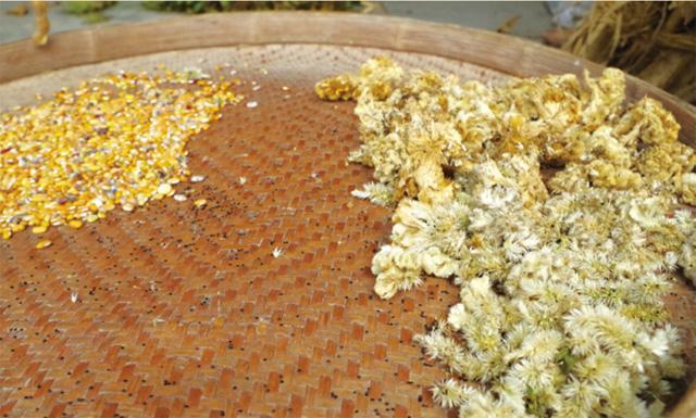 潘奶孙家晾晒的草药和玉米
