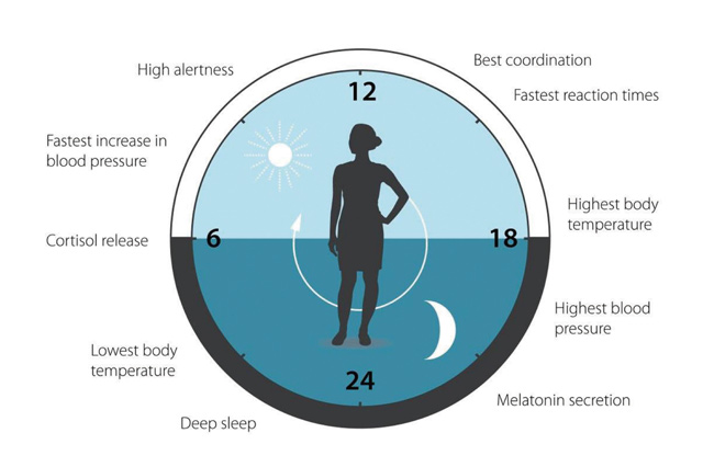 """关于""""生物钟""""研究的图"""