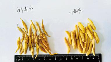 浙麦冬与川麦冬的区别
